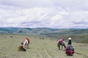 Horses on the Tagong Grasslands